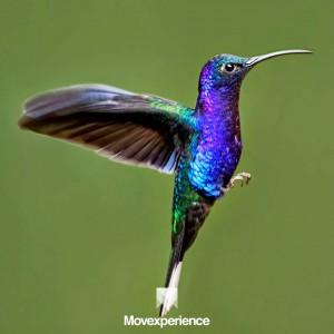 turismo-aventura-sp-mg-trilha-caminhada-estudo-natureza-ecoturismo-atividade-sustentável-observacao-fauna-flora