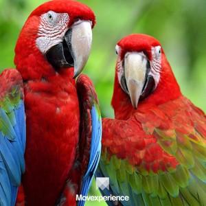 turismo-aventura-sp-trilha-caminhada-estudo-natureza-ecoturismo-atividade-sustentável-observacao-fauna-flora